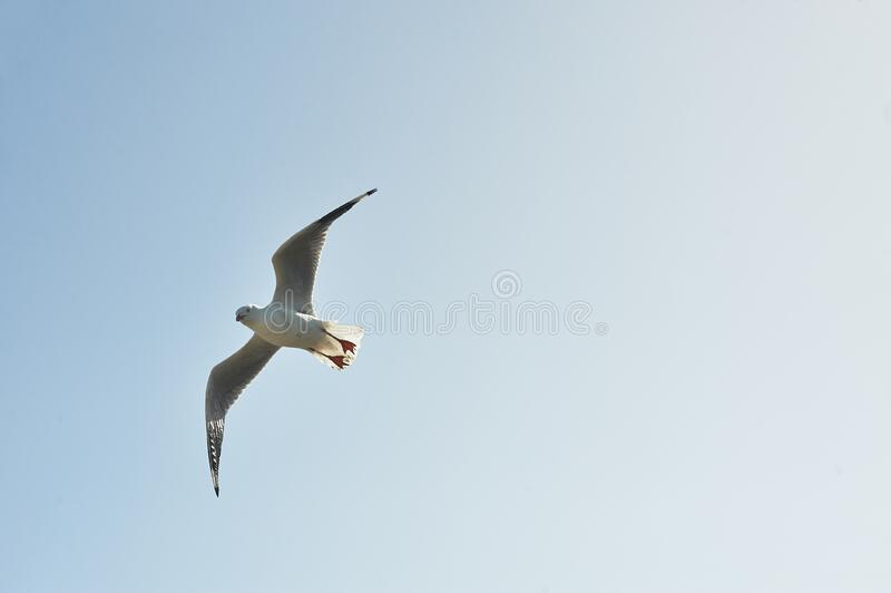 White and Grey Bird Flying in the Sky during Day Time royalty free stock photos