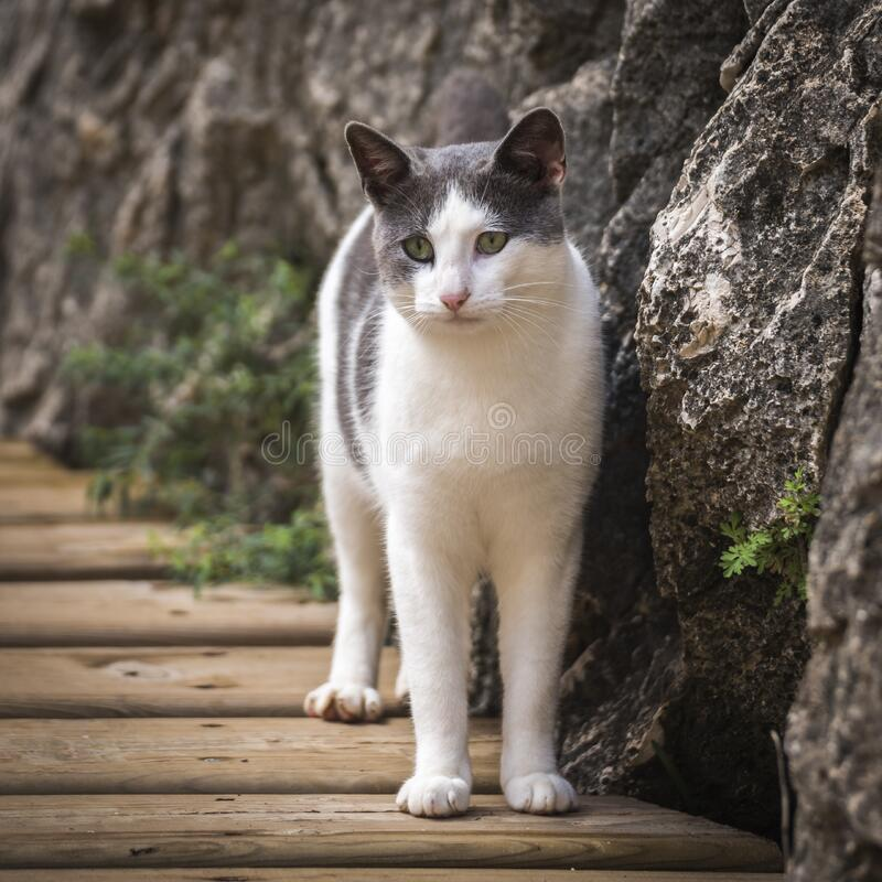 White and Grey Short Fur Cat Beside Grey Rock during Daytime stock photos