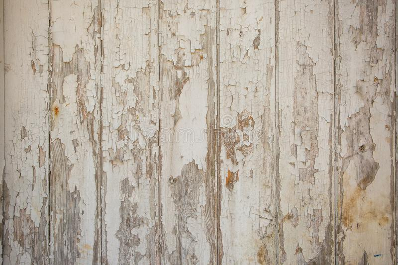 White/grey wood texture background with natural patterns. Abstract backdrop stock photography