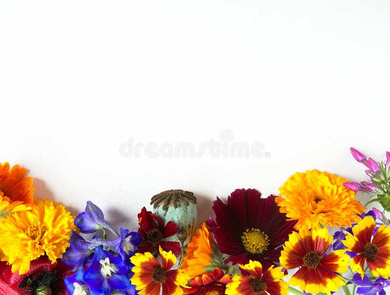 White grungy paper background with a group of bright multicolored garden flowers stock photos