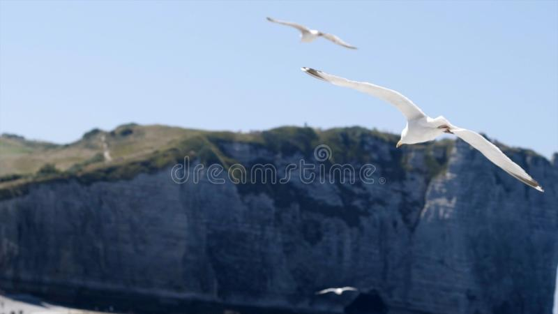 White gull flies on background of blue sea with rocky coast. Action. Flight of white seagull in clear sky on background. Of sea landscape with rocks is royalty free stock photography