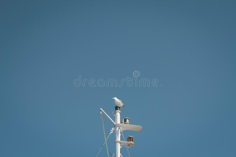White Gull Sitting On Pole Free Public Domain Cc0 Image