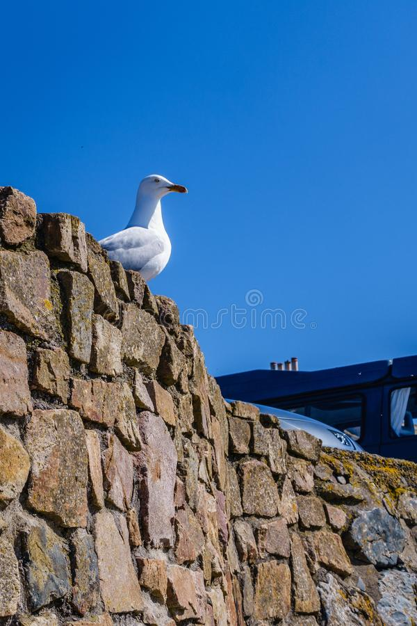 White gull is sitting on a wall. On a blue sky background a white gull is sitting on a wall made of stones; free space in the sky royalty free stock image