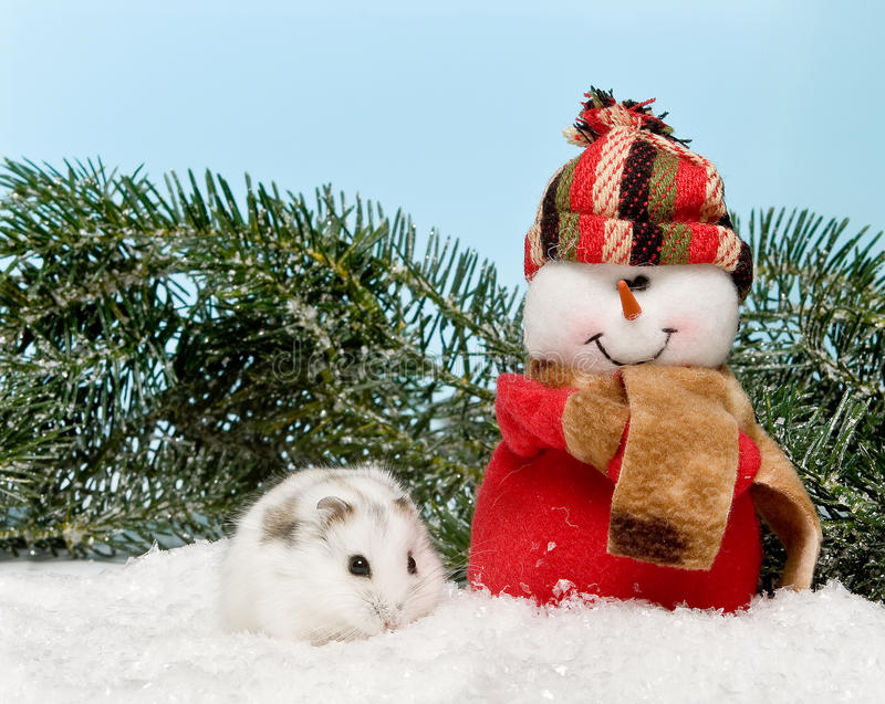 White hamster in the snow royalty free stock images