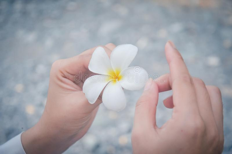 White hands like porcelain flowers stock photography