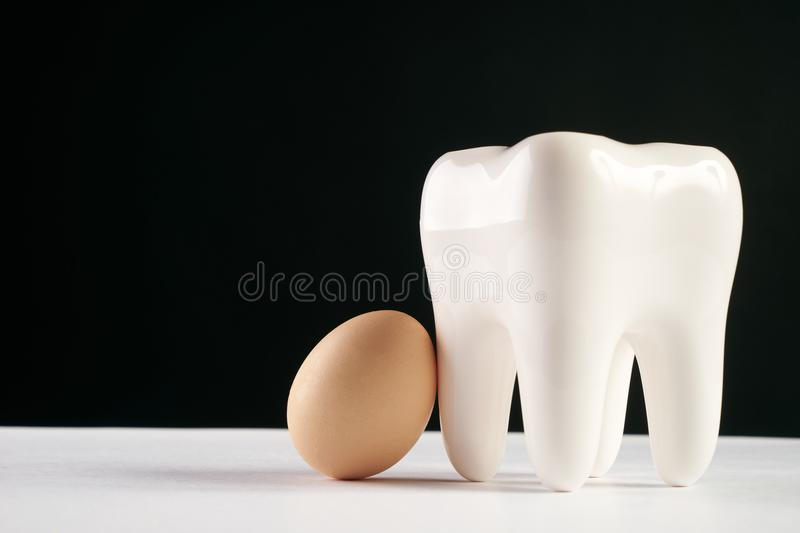 White healthy human tooth model and chicken egg royalty free stock image