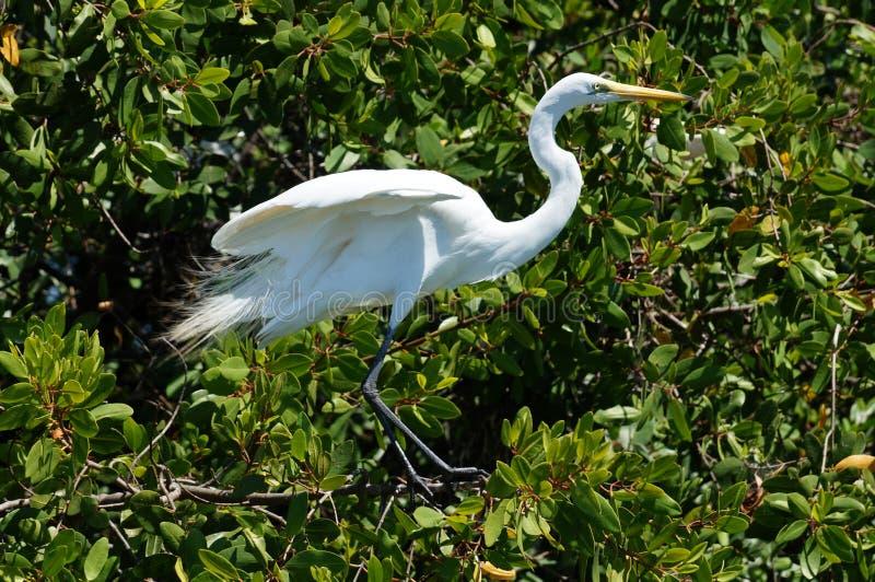 White heron on a tree. royalty free stock photo