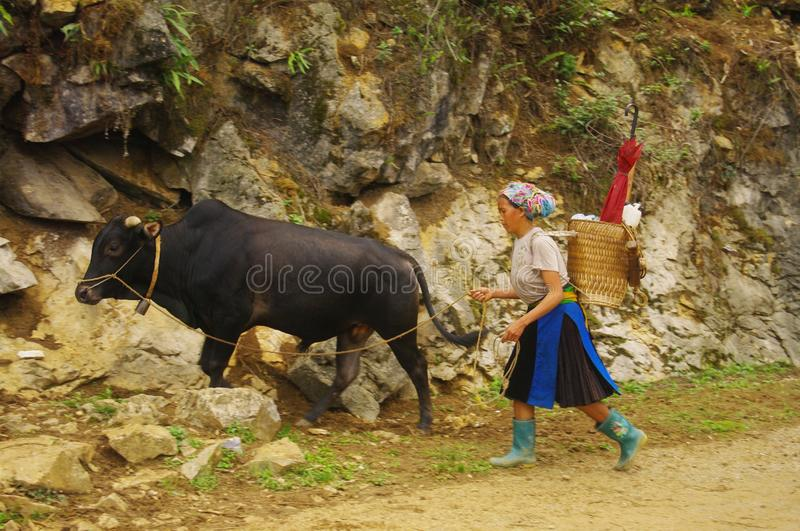 White Hmong woman returning from the fields stock photography