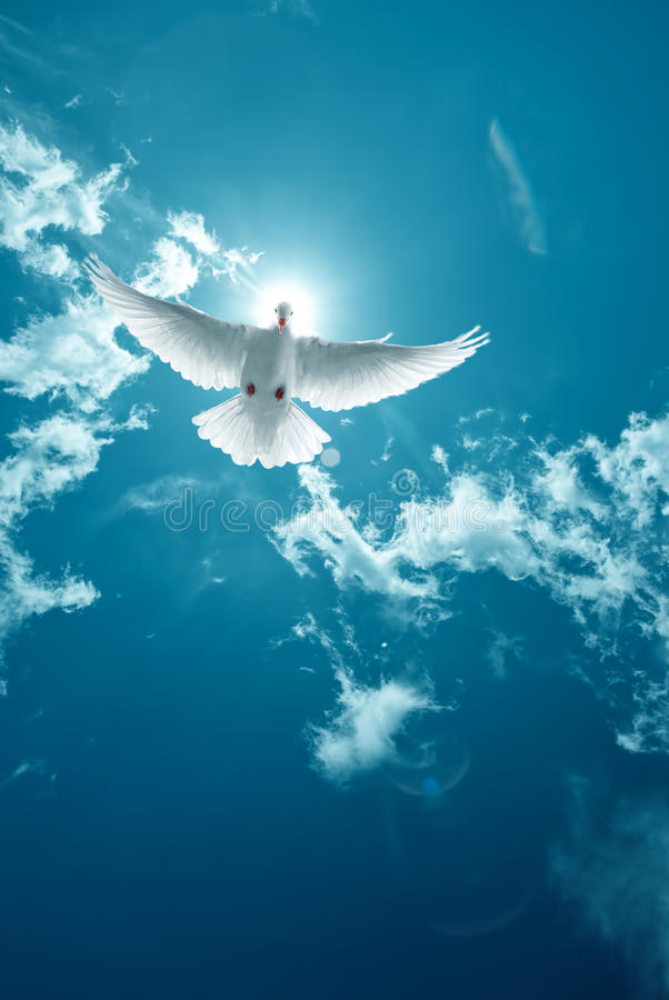 White Holy Dove flying in the sky vertical image royalty free stock photo