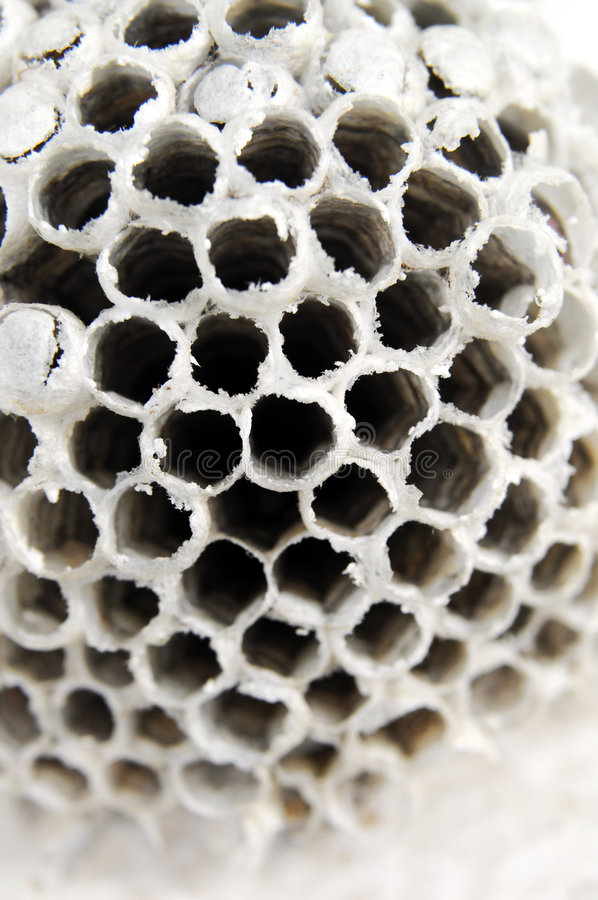 White Honeycomb * stock image