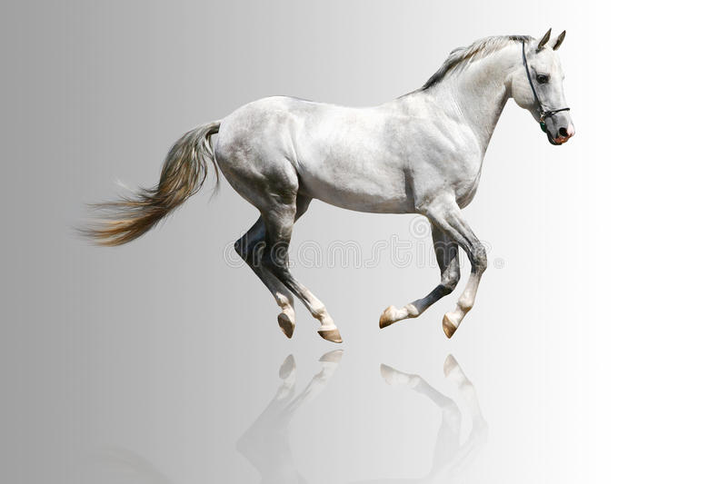 Download White Horse Royalty Free Stock Photography - Image: 12226697