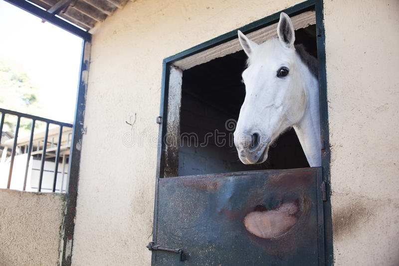 Download White horse stock photo. Image of expression, horse, fast - 29254876
