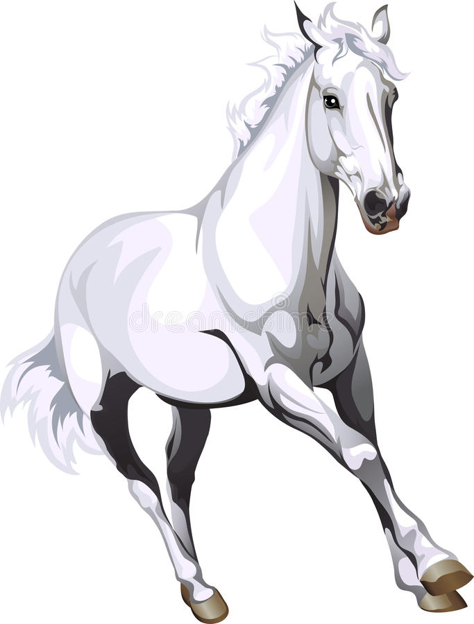 Free White Horse Royalty Free Stock Photography - 35579797