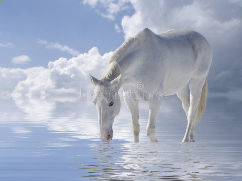 White horse. Water and clouds stock illustration