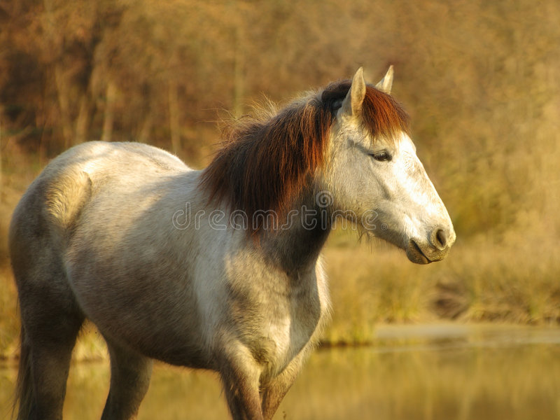 Download White horse stock image. Image of natural, equine, field - 4507399