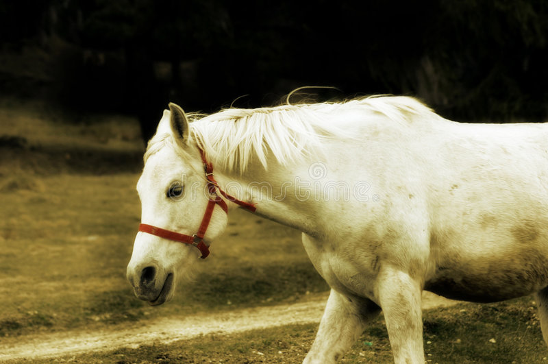 Download White horse stock image. Image of nature, horse, grey, bridle - 935179