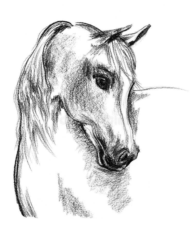 White Horse_Art Charcoal on paper stock images
