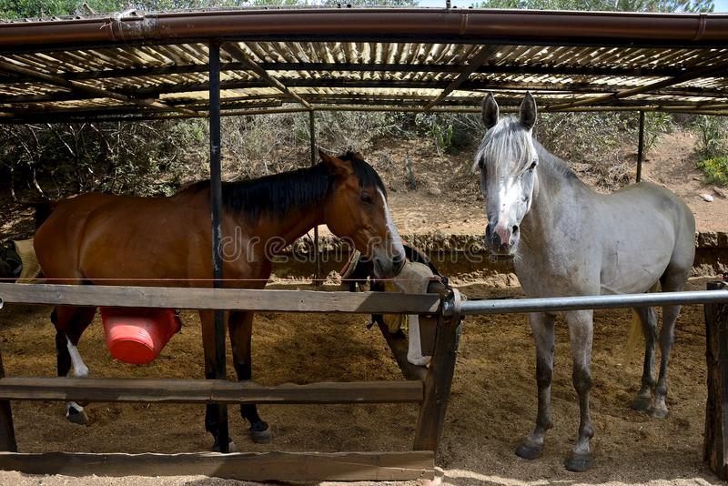 White horse and brown horse inside a paddock stock photos