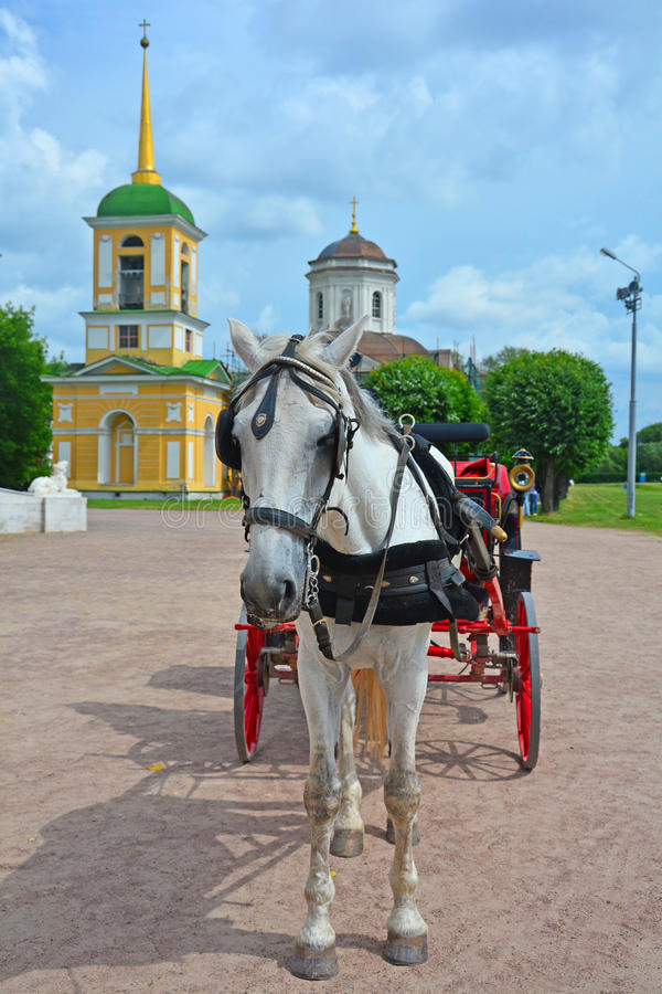 White horse with the carriage at Church of the All-Merciful Saviour in Kuskovo estate in Moscow royalty free stock image
