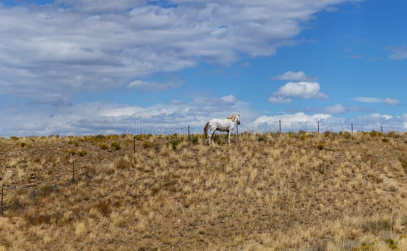 White Horse On A Desert Range In The Southwest USA. White Horse near a fence On A Desert Range In The Southwest USA royalty free stock images