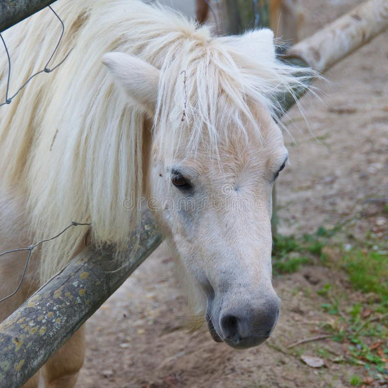 White horse at the farm in Pamplona, Spain. Europe stock photos