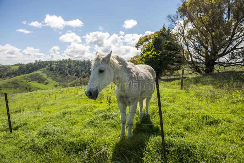 White horse in Farm stock photo