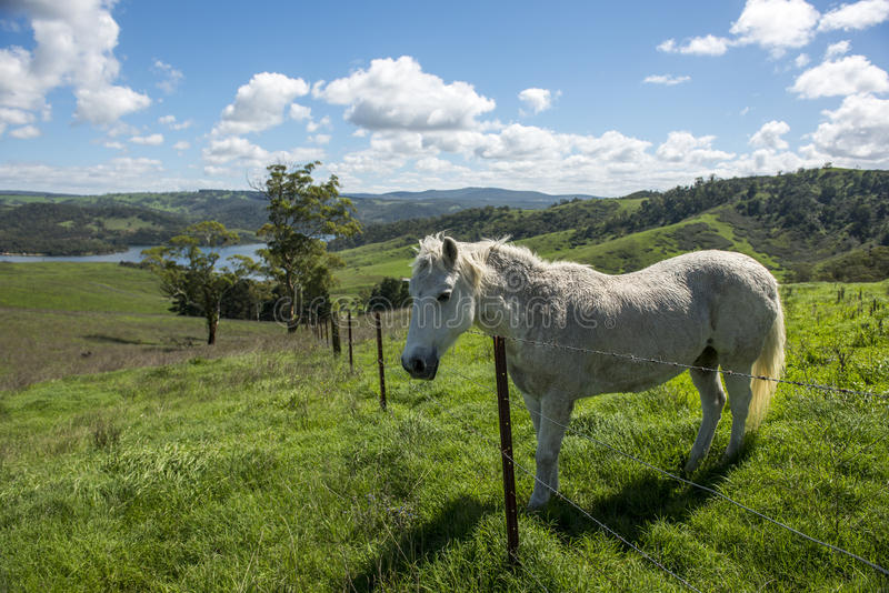 White horse in Farm royalty free stock photo