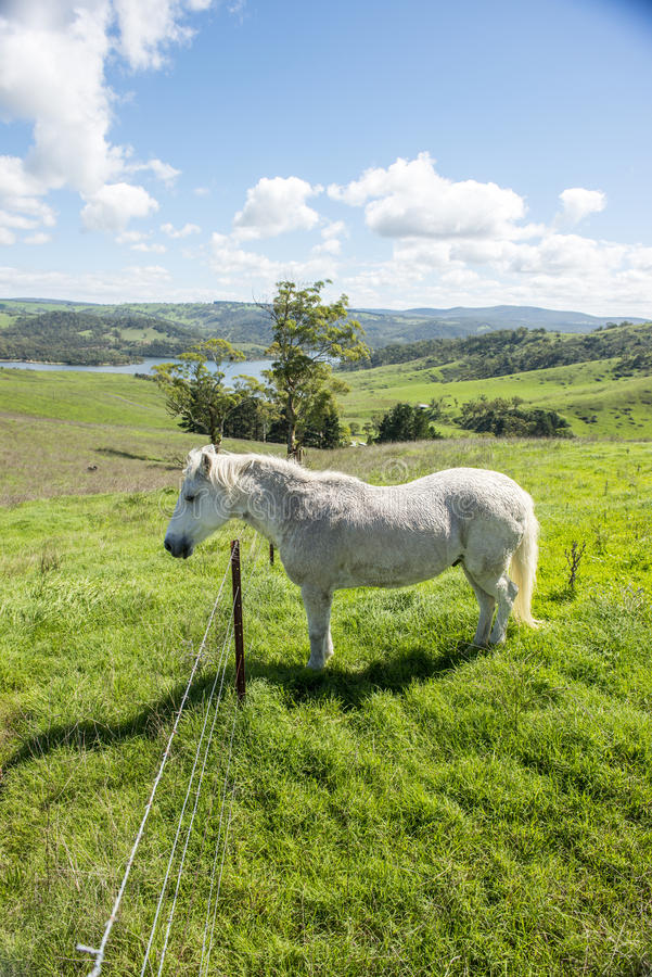 White horse in Farm stock photos