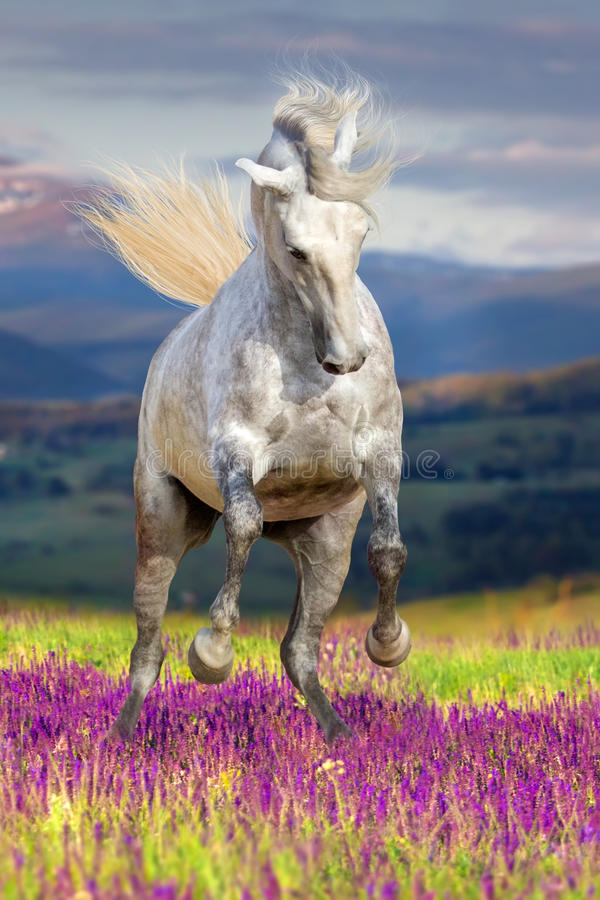 White horse in flowers royalty free stock image