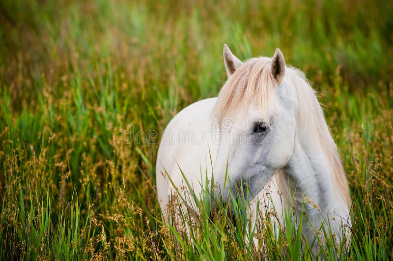 White horse in grass stock photos