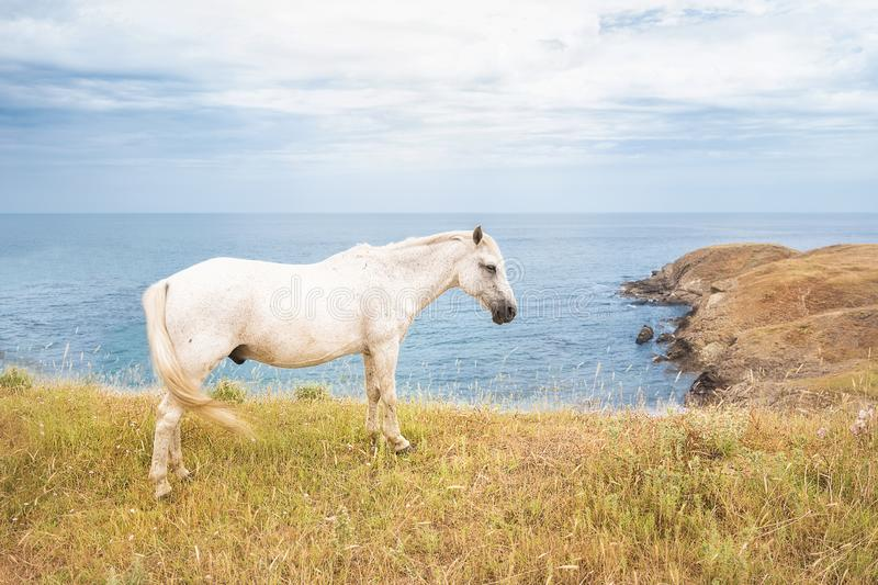 The white horse grazing on a hill with the Bulgarian Black Sea coast in the background stock images