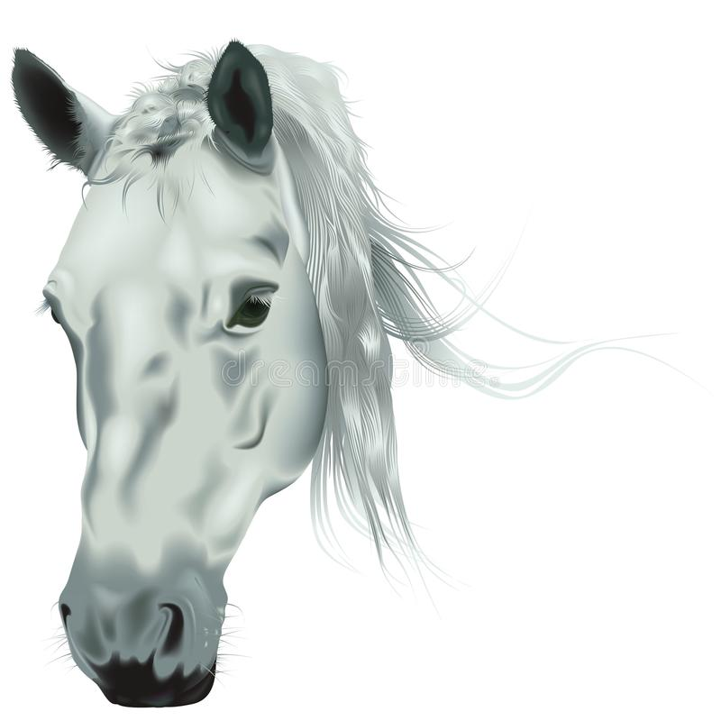 Download White Horse Head stock vector. Illustration of whitehorse - 31457824