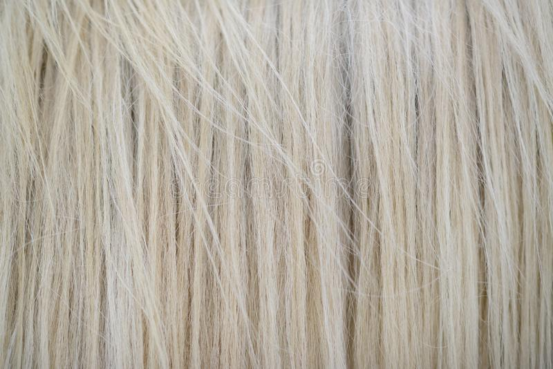 White horse high detailed hair texture royalty free stock images