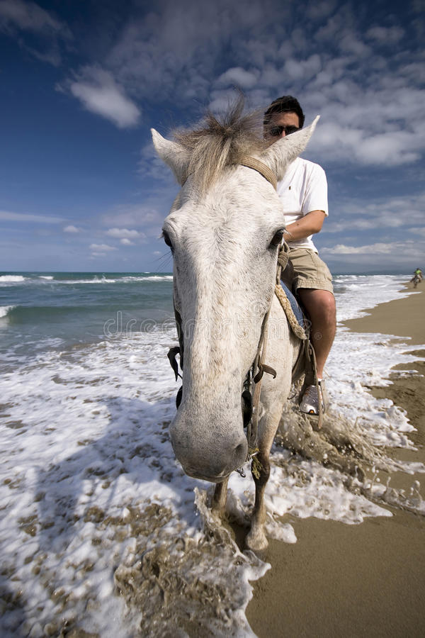 White horse on the ocean shore stock photos