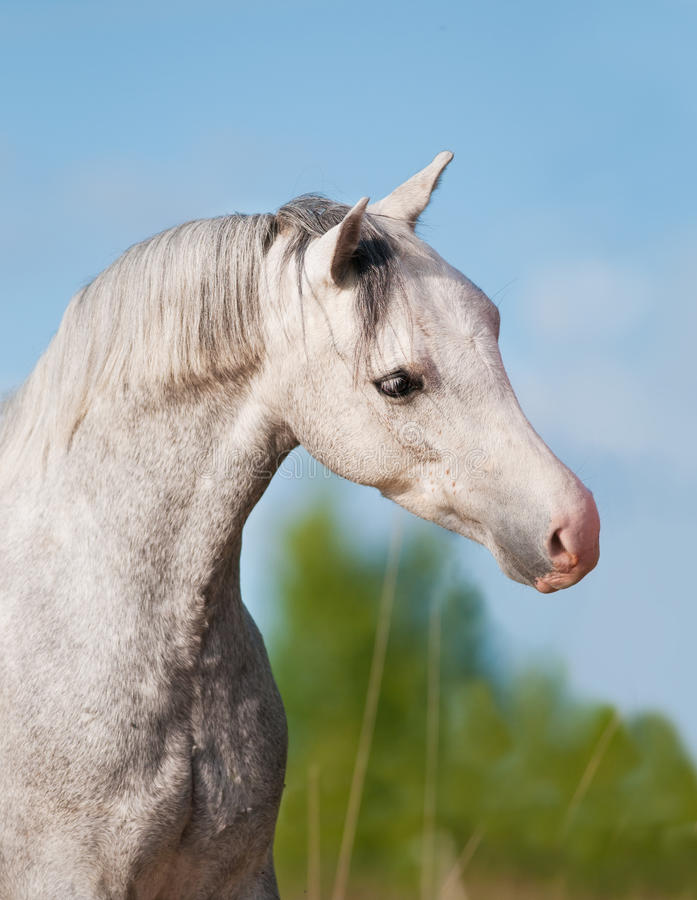 White Horse Portrait On The Summer Background Stock Image
