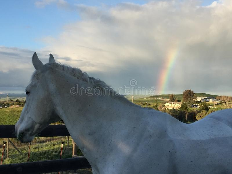 White horse and Rainbow with storm clouds and blue sky stock photography