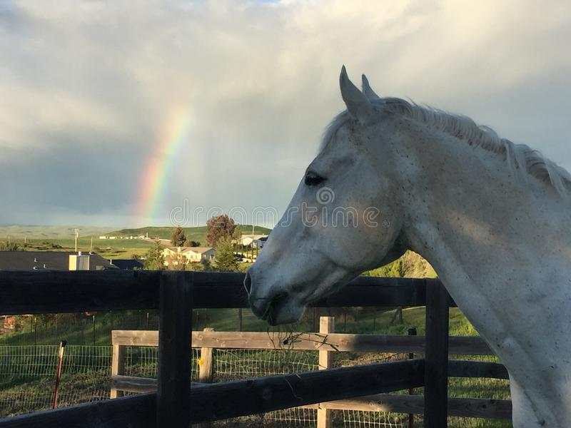 White horse and Rainbow with storm clouds and blue sky stock photo