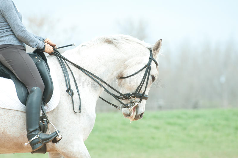 Download White Horse And Rider Royalty Free Stock Photo - Image: 24363815