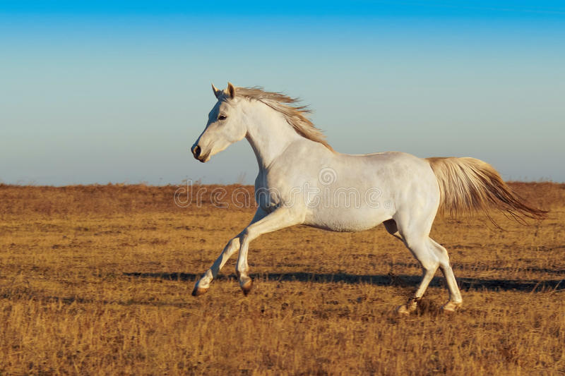white horse running id - photo #13