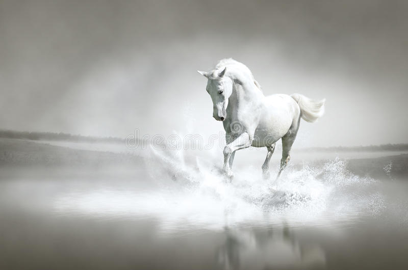 Download White Horse Running Through Water Stock Image - Image of moving, lipizzaner: 26648845