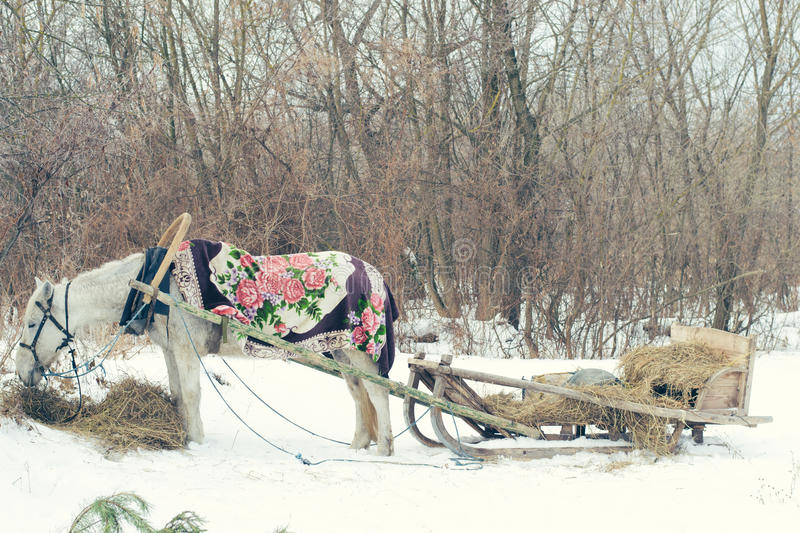White horse and sleigh in winter stock photo