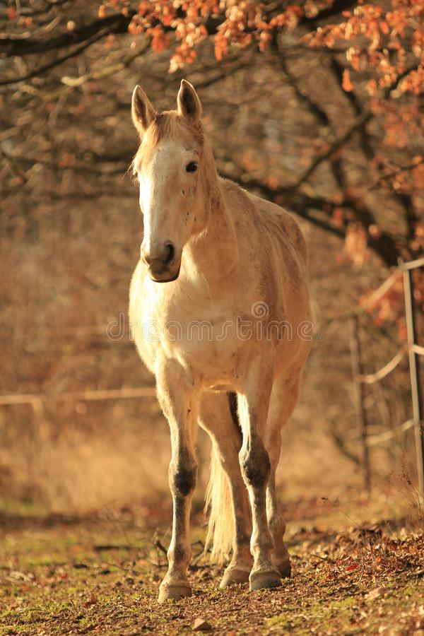 White horse standing in the forest stock image