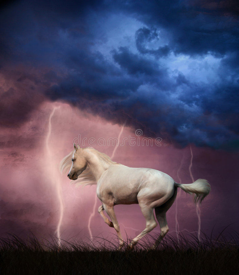 White horse and thunderstorm royalty free stock image