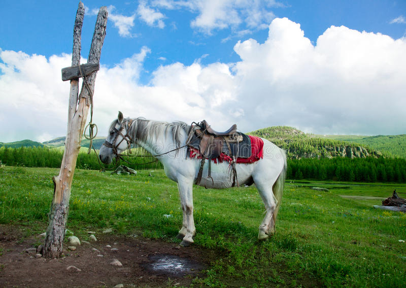 A white horse tied to a post stock photos