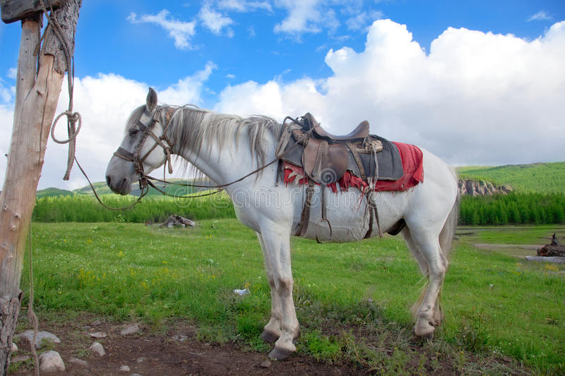 A white horse tied to a post stock photo