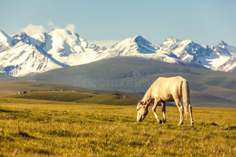The horse under snow mountains stock photos