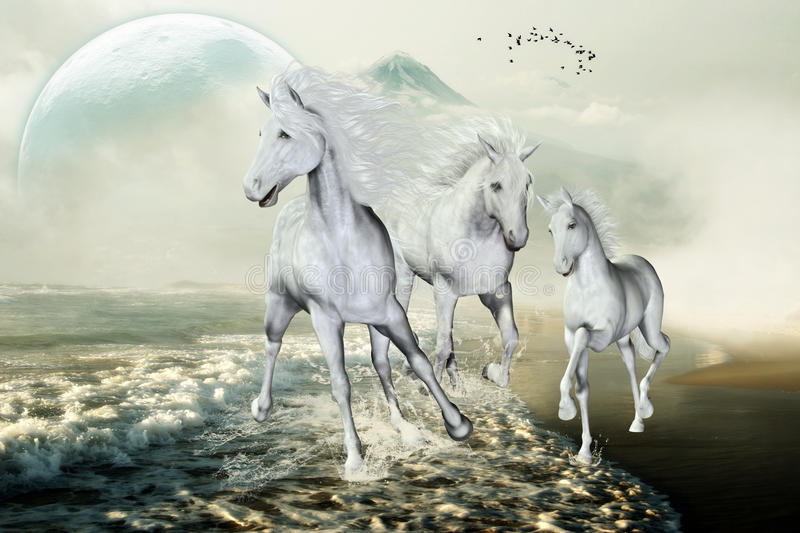 White Horses On The Beach. White horses galloping with pleasure on the beach in the freedom. A fantastic horse picture for all horse lovers royalty free illustration