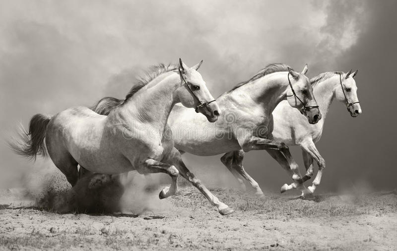 Download White horses in dust stock photo. Image of gray, fast - 20085644