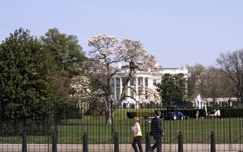 White house in spring stock image