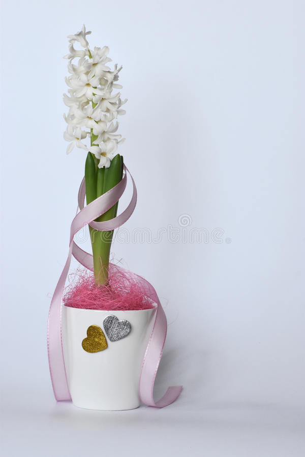 White hyacinth with a pink ribbon and hearts. stock photography